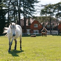 New Forest National Park.....from £449pp