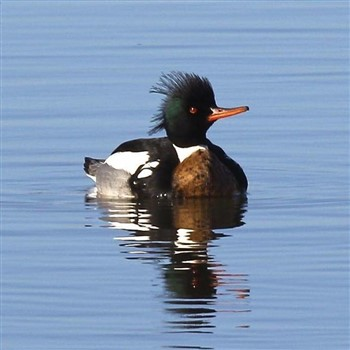 Exeter Wildlife & Bird Watching Cruise - £29