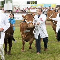 Devon County Show - Ad £37inc Senior £35inc