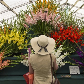 Tatton Park Flower Show & RHS Bridgewater