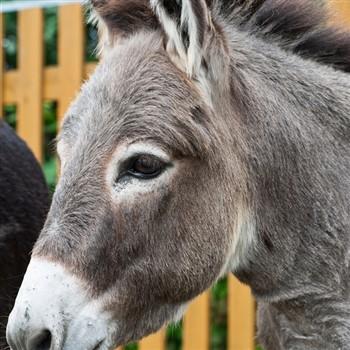 Lyme Regis and the Donkey Sanctuary