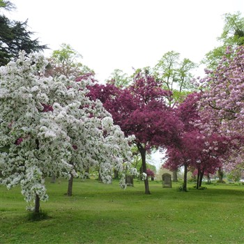 Evesham Blossom Trail