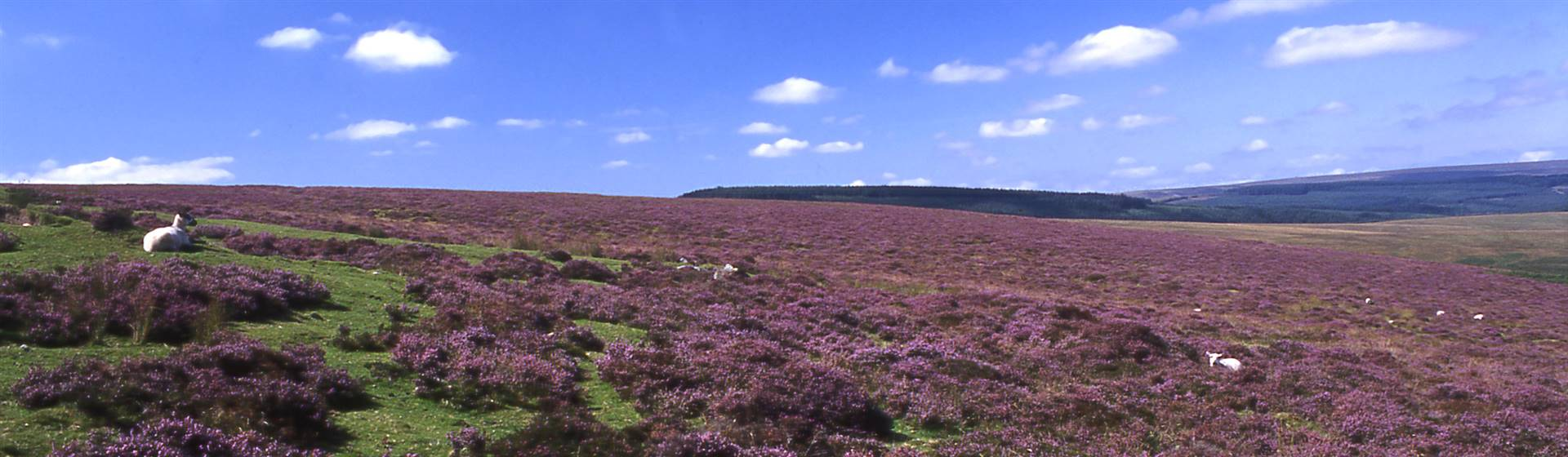Scenic Dartmoor & Tavistock